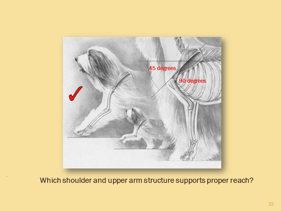 23 45 degrees 90 degrees. Which shoulder and upper arm structure supports proper reach?