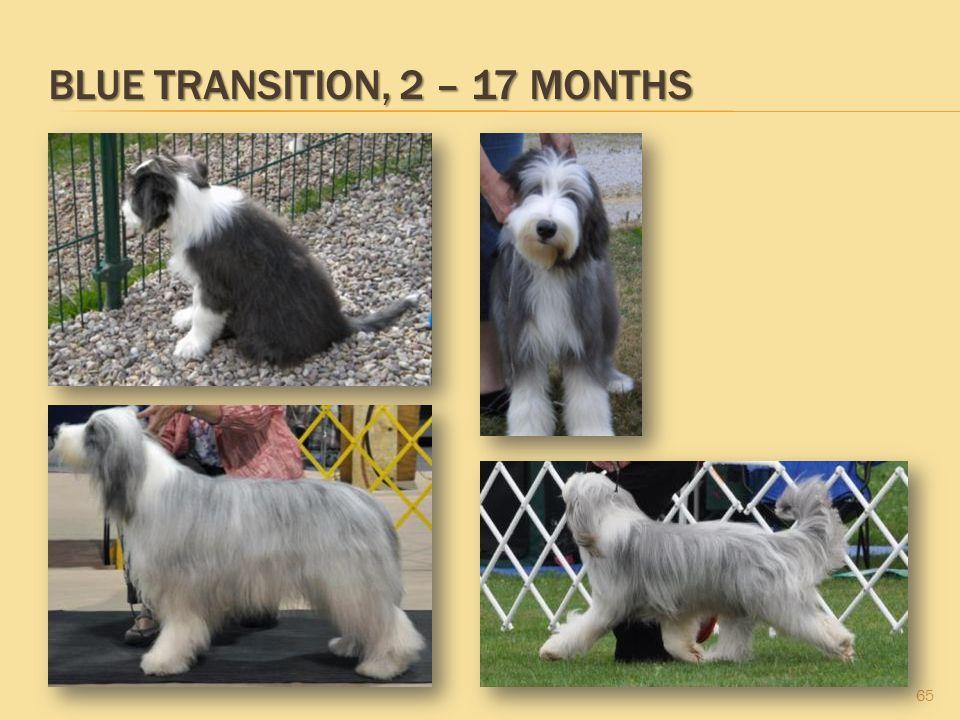 BLUE TRANSITION, 2 – 17 MONTHS 65