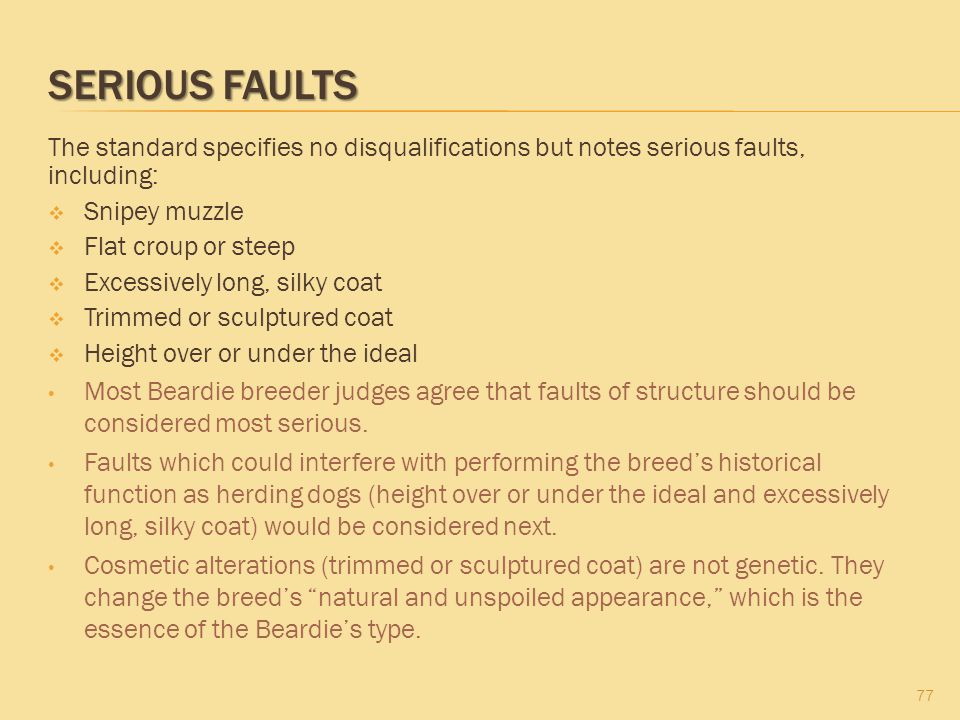 SERIOUS FAULTS The standard specifies no disqualifications but notes serious faults, including:  Snipey muzzle  Flat croup or steep  Excessively lo