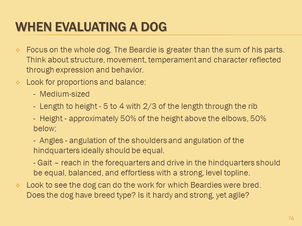 WHEN EVALUATING A DOG  Focus on the whole dog. The Beardie is greater than the sum of his parts. Think about structure, movement, temperament and cha