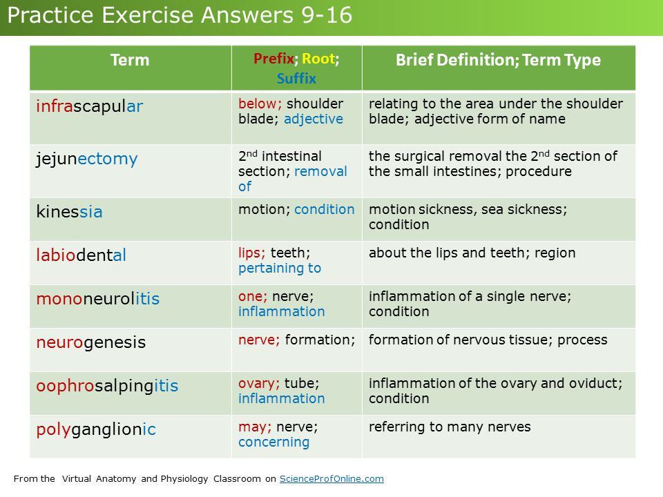 From the Virtual Anatomy and Physiology Classroom on ScienceProfOnline.comScienceProfOnline.com Practice Exercise Answers 9-16 Term Prefix; Root; Suff