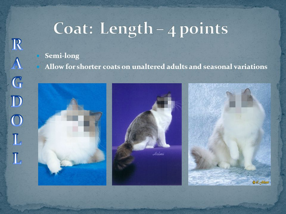 Semi-long Allow for shorter coats on unaltered adults and seasonal variations