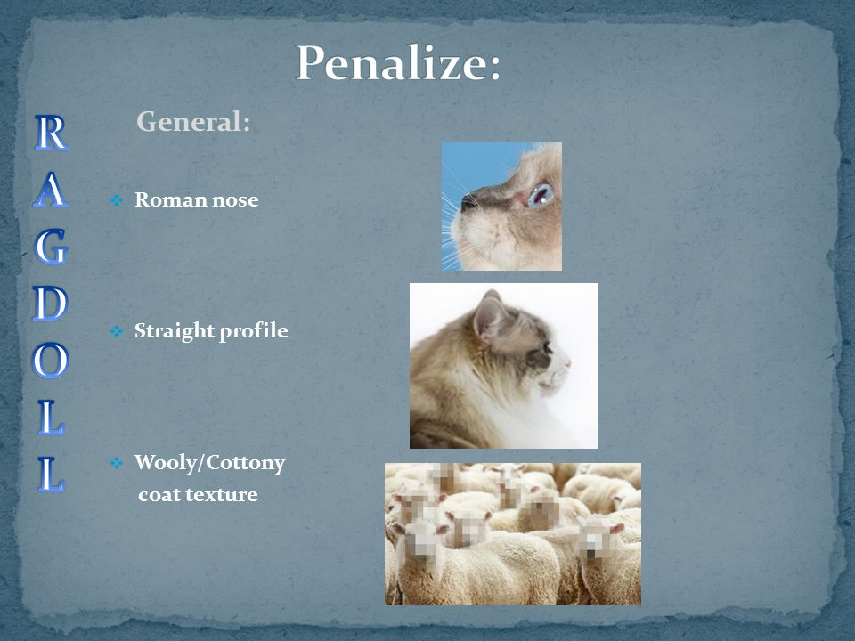General:  Roman nose  Straight profile  Wooly/Cottony coat texture