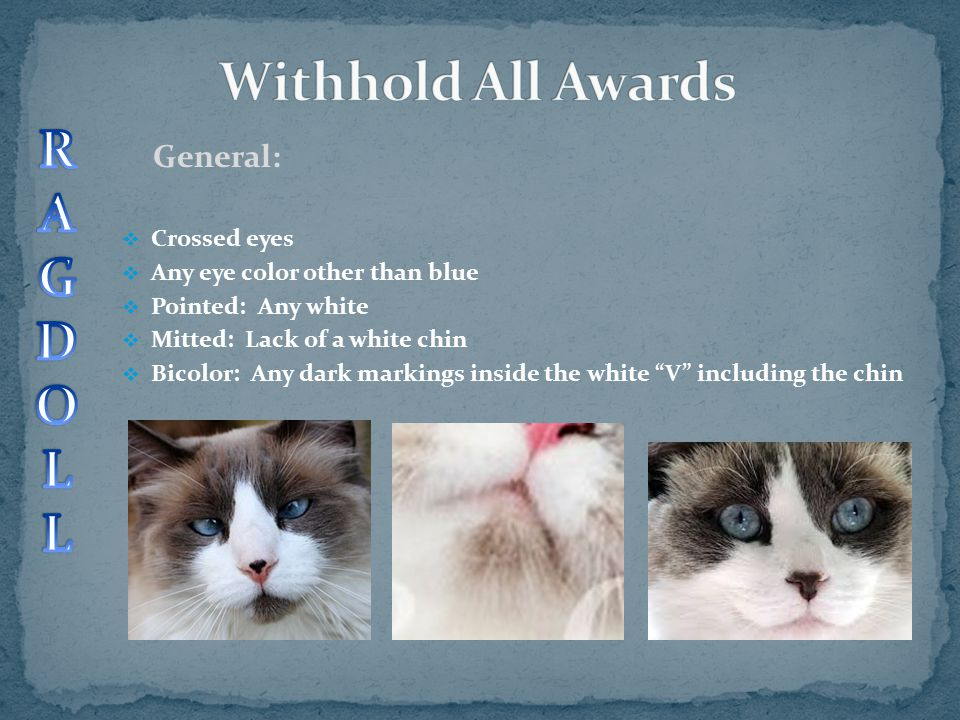 General:  Crossed eyes  Any eye color other than blue  Pointed: Any white  Mitted: Lack of a white chin  Bicolor: Any dark markings inside the wh