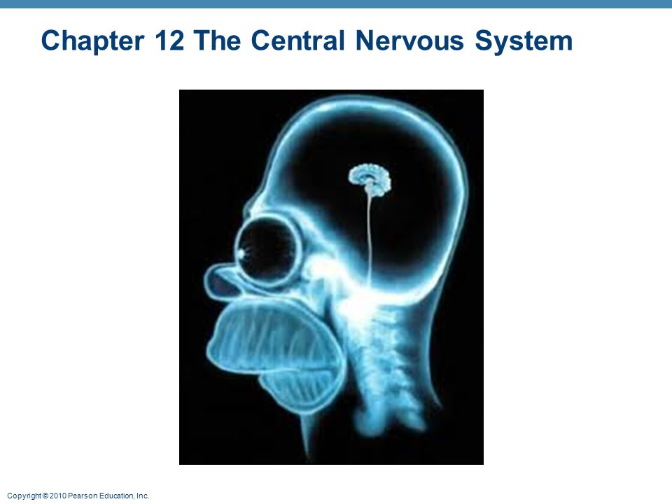 Copyright © 2010 Pearson Education, Inc. Chapter 12 The Central Nervous System