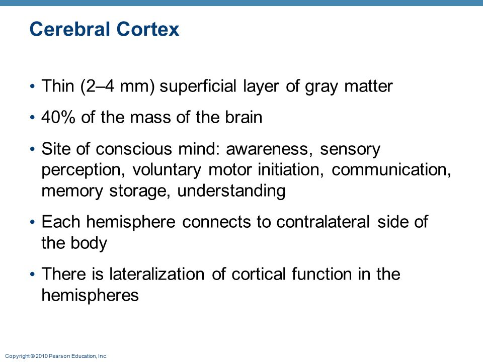 Copyright © 2010 Pearson Education, Inc. Cerebral Cortex Thin (2–4 mm) superficial layer of gray matter 40% of the mass of the brain Site of conscious