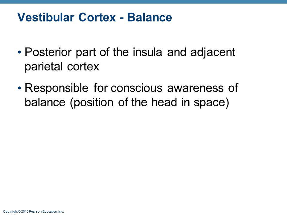 Copyright © 2010 Pearson Education, Inc. Vestibular Cortex - Balance Posterior part of the insula and adjacent parietal cortex Responsible for conscio