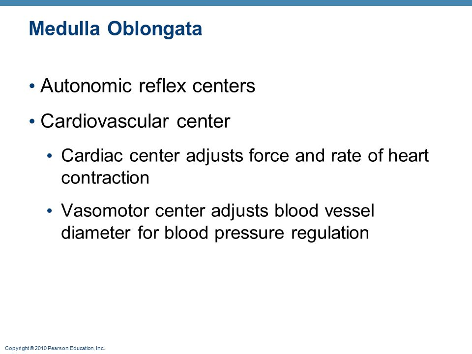 Copyright © 2010 Pearson Education, Inc. Medulla Oblongata Autonomic reflex centers Cardiovascular center Cardiac center adjusts force and rate of hea