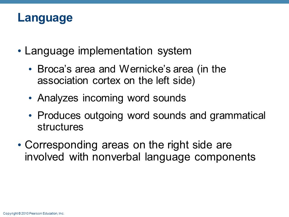 Copyright © 2010 Pearson Education, Inc. Language Language implementation system Broca's area and Wernicke's area (in the association cortex on the le