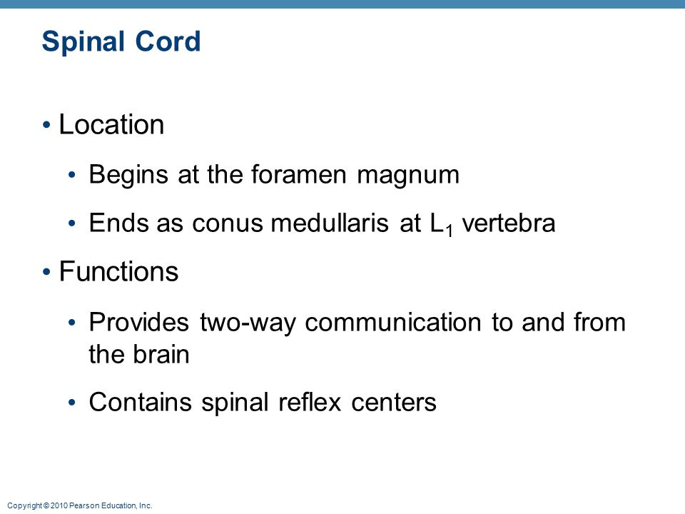 Copyright © 2010 Pearson Education, Inc. Spinal Cord Location Begins at the foramen magnum Ends as conus medullaris at L 1 vertebra Functions Provides