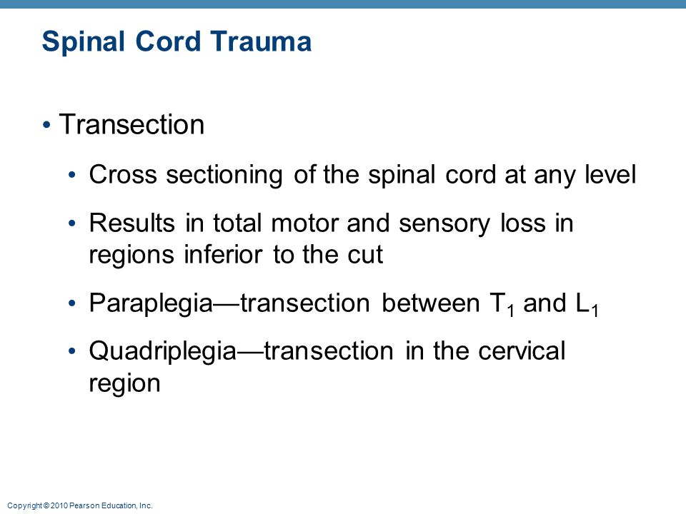Copyright © 2010 Pearson Education, Inc. Spinal Cord Trauma Transection Cross sectioning of the spinal cord at any level Results in total motor and se