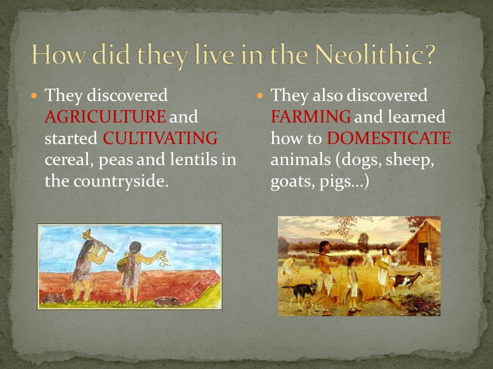 They discovered AGRICULTURE and started CULTIVATING cereal, peas and lentils in the countryside.