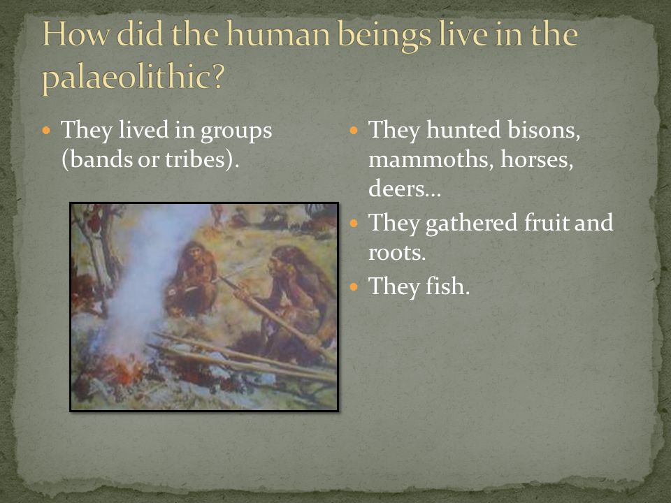 They hunted bisons, mammoths, horses, deers… They gathered fruit and roots.