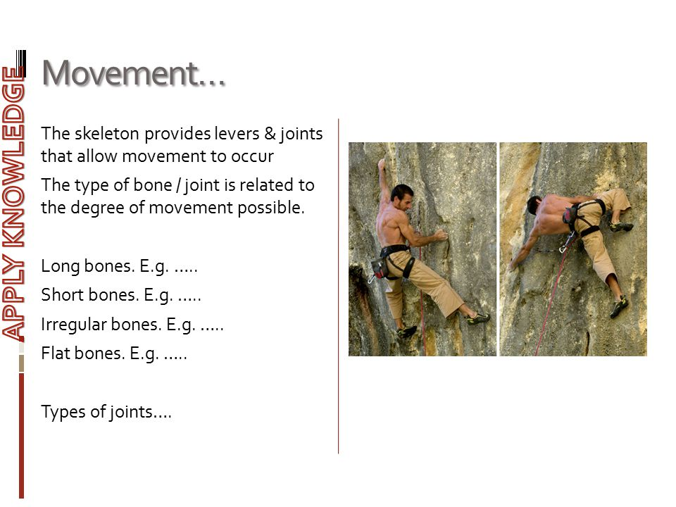 Movement… The skeleton provides levers & joints that allow movement to occur The type of bone / joint is related to the degree of movement possible. L