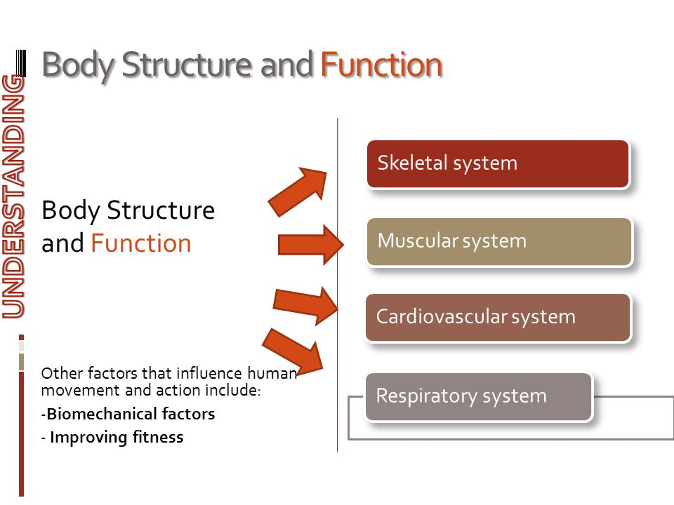 Body Structure and Function Body Structure and Function Other factors that influence human movement and action include: - Biomechanical factors - Impr