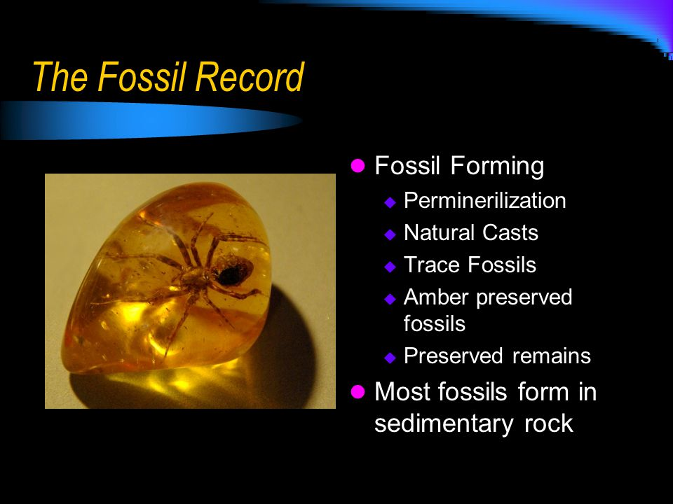 Paleozoic Era Fossil evidence shows a very diverse life during this era Was initially thought that much of this life originated during this era Actually came about much earlier