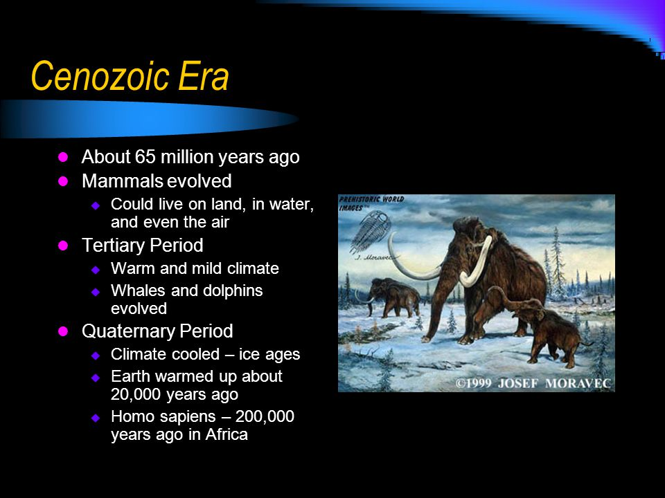 Cenozoic Era About 65 million years ago Mammals evolved  Could live on land, in water, and even the air Tertiary Period  Warm and mild climate  Wha