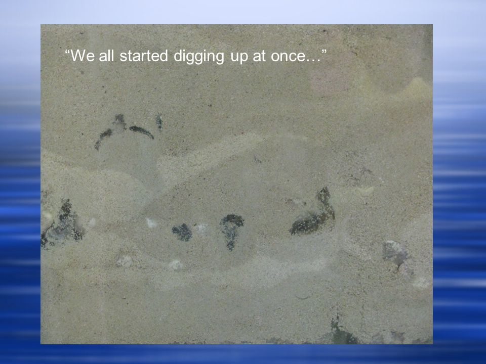 We all started digging up at once…