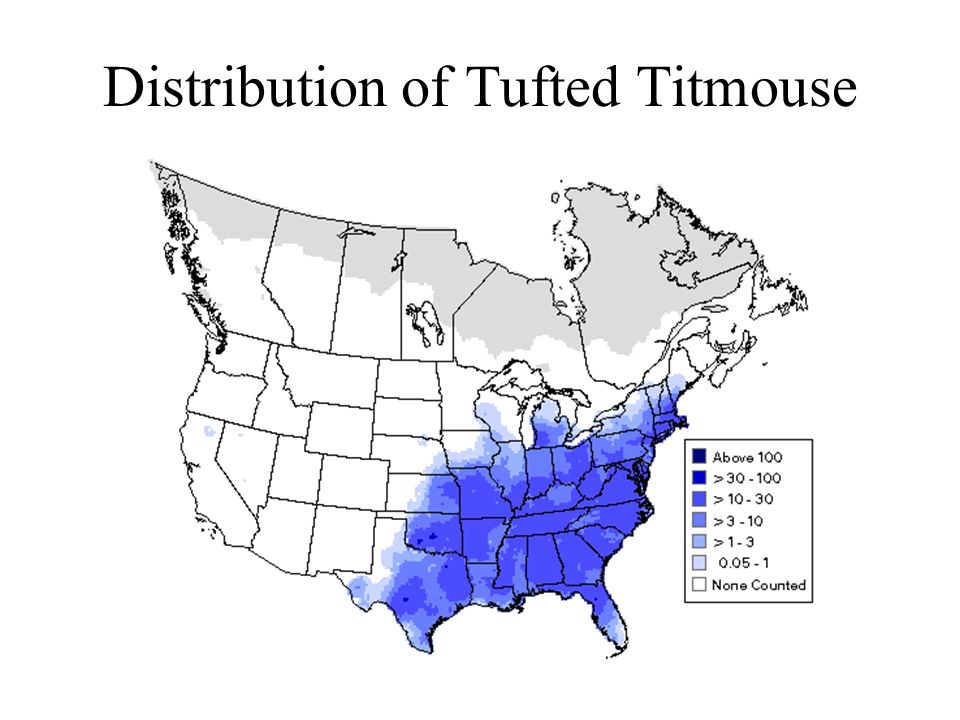 Distribution of Tufted Titmouse