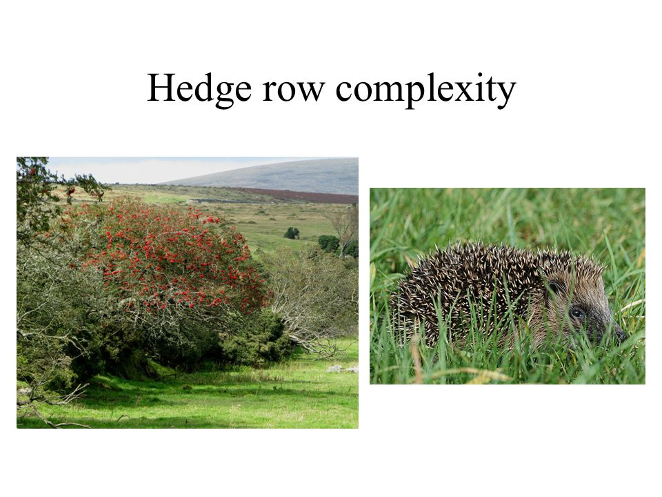 Hedge row complexity