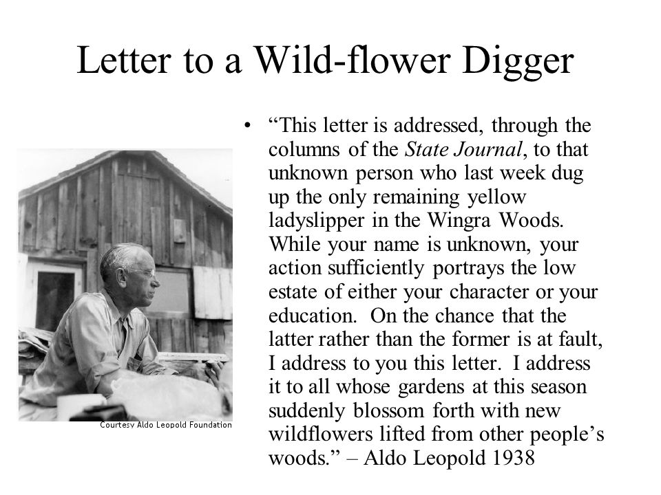 "Letter to a Wild-flower Digger ""This letter is addressed, through the columns of the State Journal, to that unknown person who last week dug up the on"