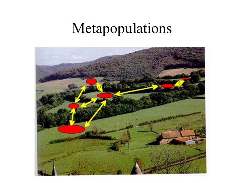 Metapopulations