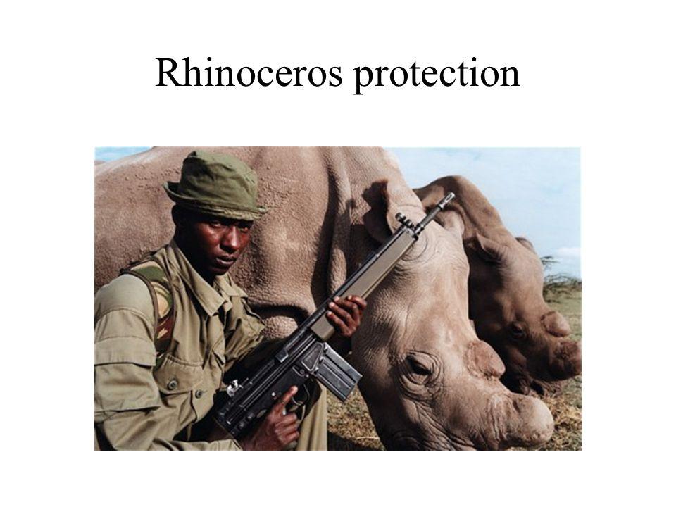 Rhinoceros protection