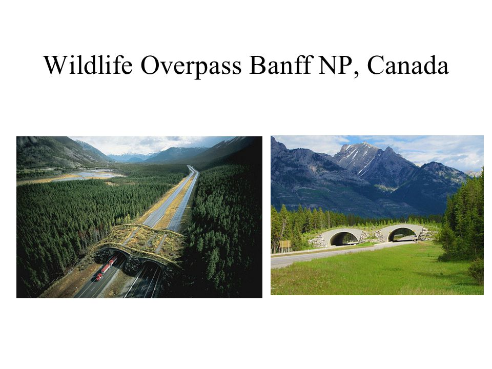 Wildlife Overpass Banff NP, Canada