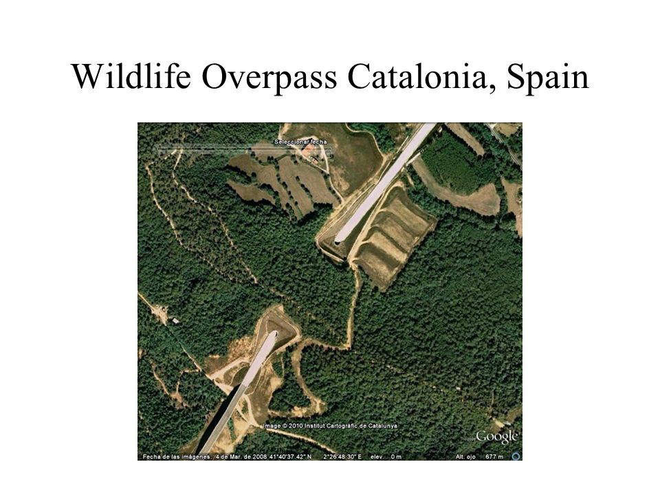 Wildlife Overpass Catalonia, Spain