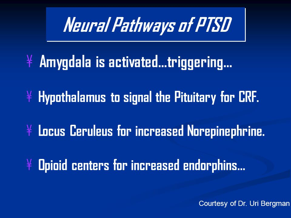 ¥ Amygdala is activated…triggering… ¥ Hypothalamus to signal the Pituitary for CRF.