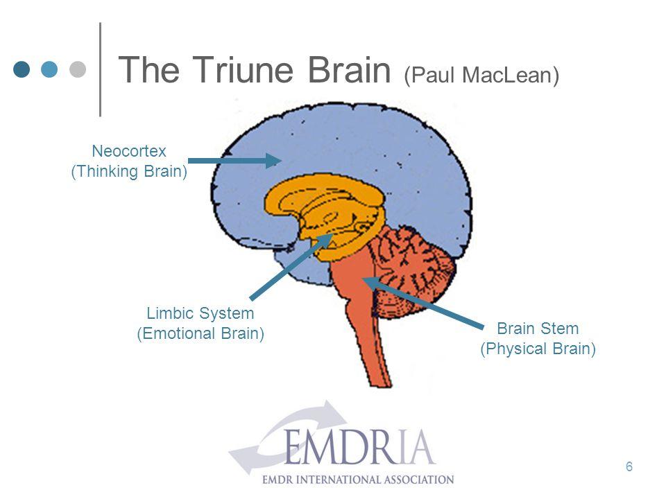 The Triune Brain (Paul MacLean) 6 Neocortex (Thinking Brain) Limbic System (Emotional Brain) Brain Stem (Physical Brain)