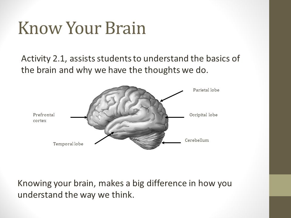 Know Your Brain Activity 2.1, assists students to understand the basics of the brain and why we have the thoughts we do. Parietal lobe Occipital lobeP