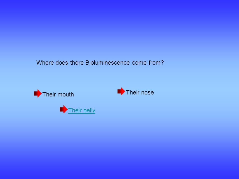 Where does there Bioluminescence come from Their mouth Their belly Their nose