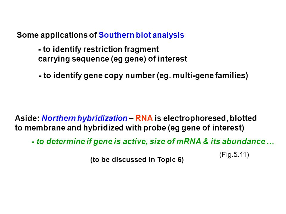 Some applications of Southern blot analysis - to identify restriction fragment carrying sequence (eg gene) of interest - to identify gene copy number (eg.