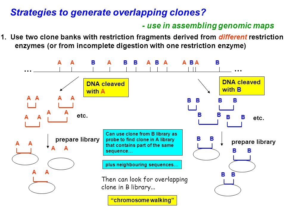 Strategies to generate overlapping clones.