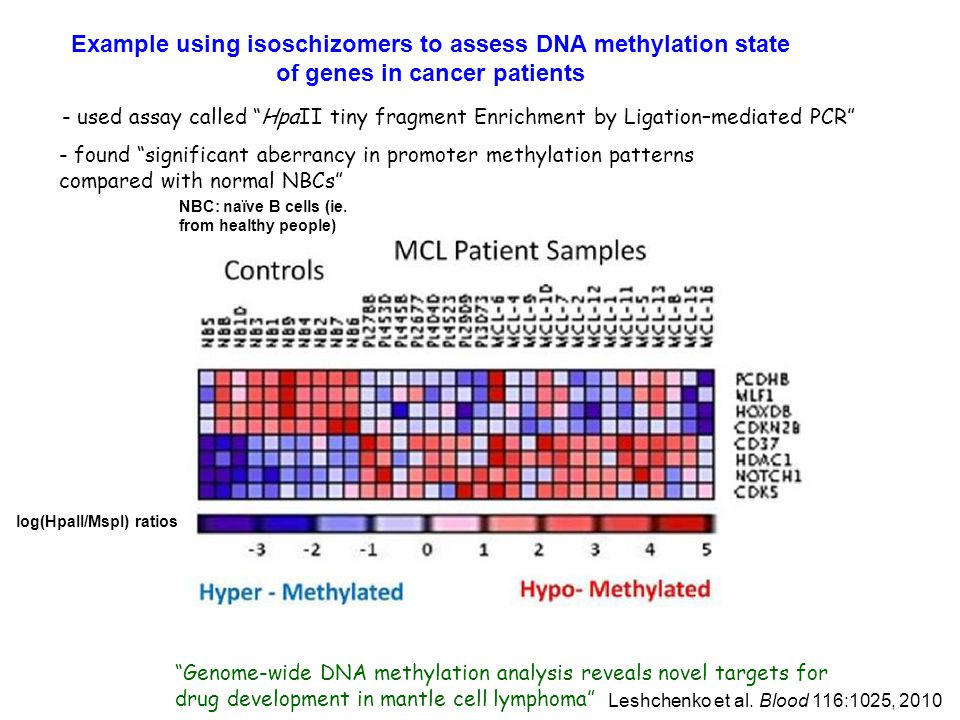- used assay called HpaII tiny fragment Enrichment by Ligation–mediated PCR Genome-wide DNA methylation analysis reveals novel targets for drug development in mantle cell lymphoma Example using isoschizomers to assess DNA methylation state of genes in cancer patients Leshchenko et al.