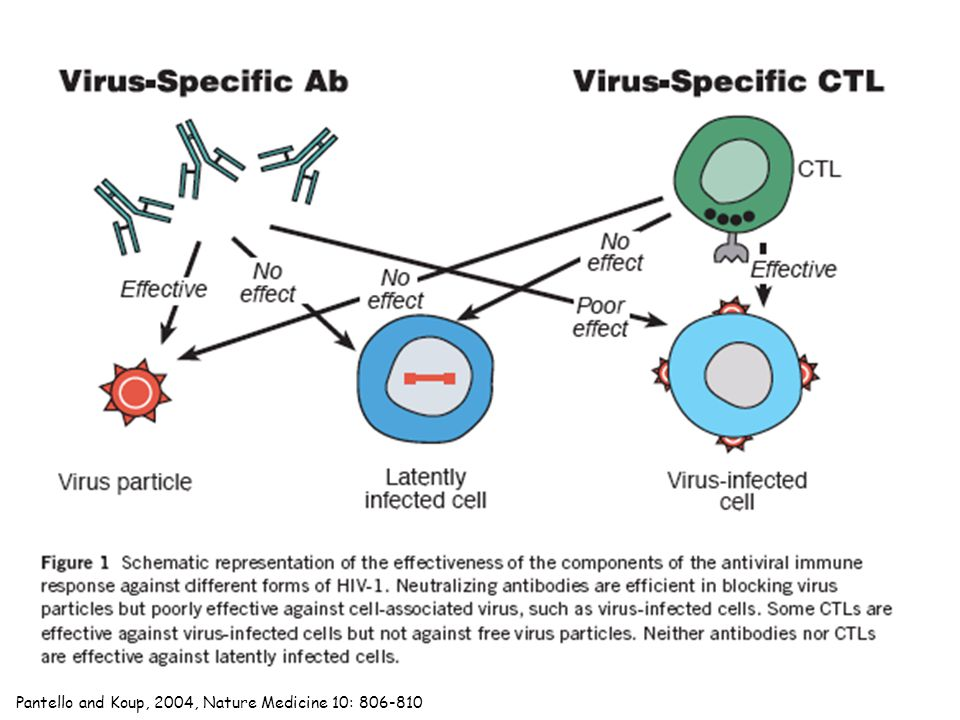 Traditional approach to an HIV vaccine: whole-killed virus Problems: Safety issues: are the viruses really dead.
