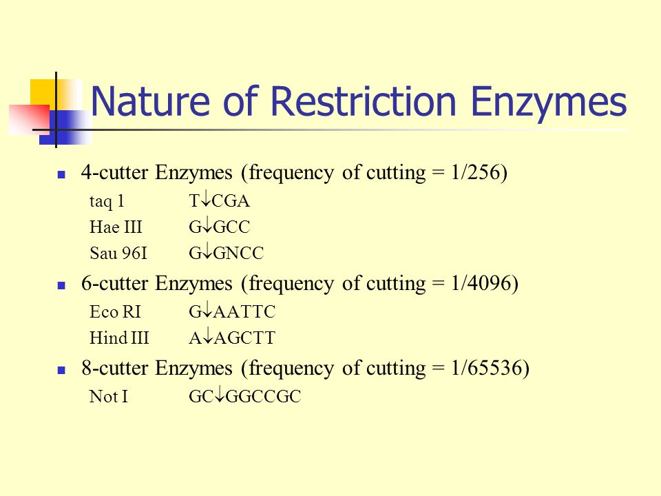 Nature of Restriction Enzymes 4-cutter Enzymes (frequency of cutting = 1/256) taq 1 T  CGA Hae III G  GCC Sau 96I G  GNCC 6-cutter Enzymes (frequency of cutting = 1/4096) Eco RI G  AATTC Hind III A  AGCTT 8-cutter Enzymes (frequency of cutting = 1/65536) Not IGC  GGCCGC