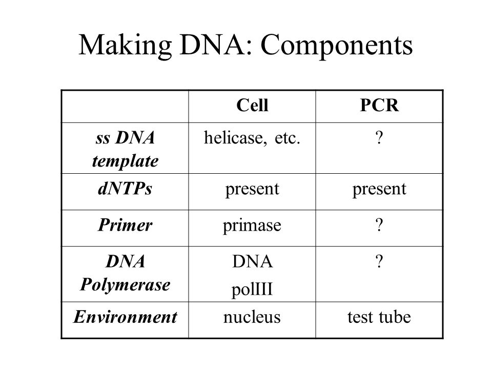Making DNA: Components CellPCR ss DNA template helicase, etc..