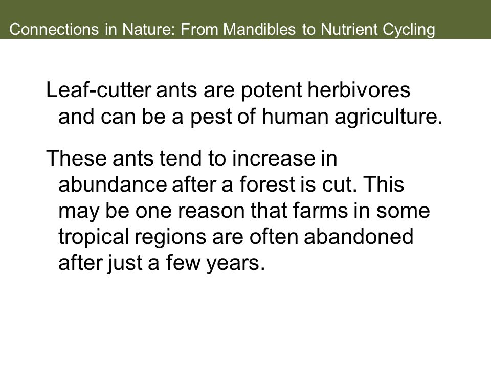 Connections in Nature: From Mandibles to Nutrient Cycling Leaf-cutter ants are potent herbivores and can be a pest of human agriculture.