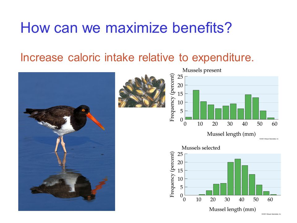 How can we maximize benefits Increase caloric intake relative to expenditure.