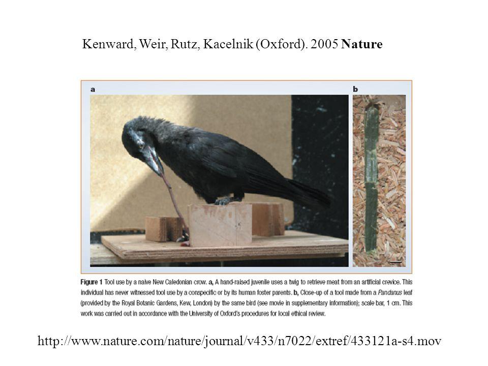 http://www.nature.com/nature/journal/v433/n7022/extref/433121a-s4.mov Kenward, Weir, Rutz, Kacelnik (Oxford).