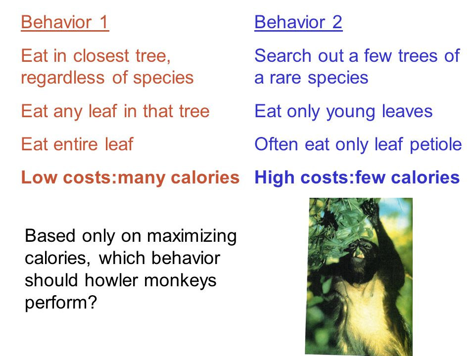 Behavior 1 Eat in closest tree, regardless of species Eat any leaf in that tree Eat entire leaf Low costs:many calories Behavior 2 Search out a few trees of a rare species Eat only young leaves Often eat only leaf petiole High costs:few calories Based only on maximizing calories, which behavior should howler monkeys perform