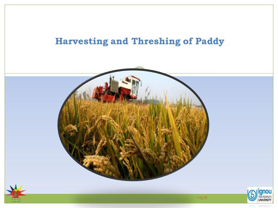 Harvesting and Threshing of Paddy Next