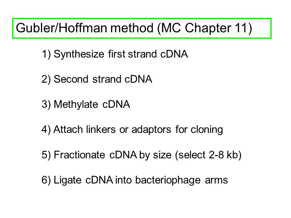 Gubler/Hoffman method (MC Chapter 11) 1) Synthesize first strand cDNA 2) Second strand cDNA 3) Methylate cDNA 4) Attach linkers or adaptors for clonin