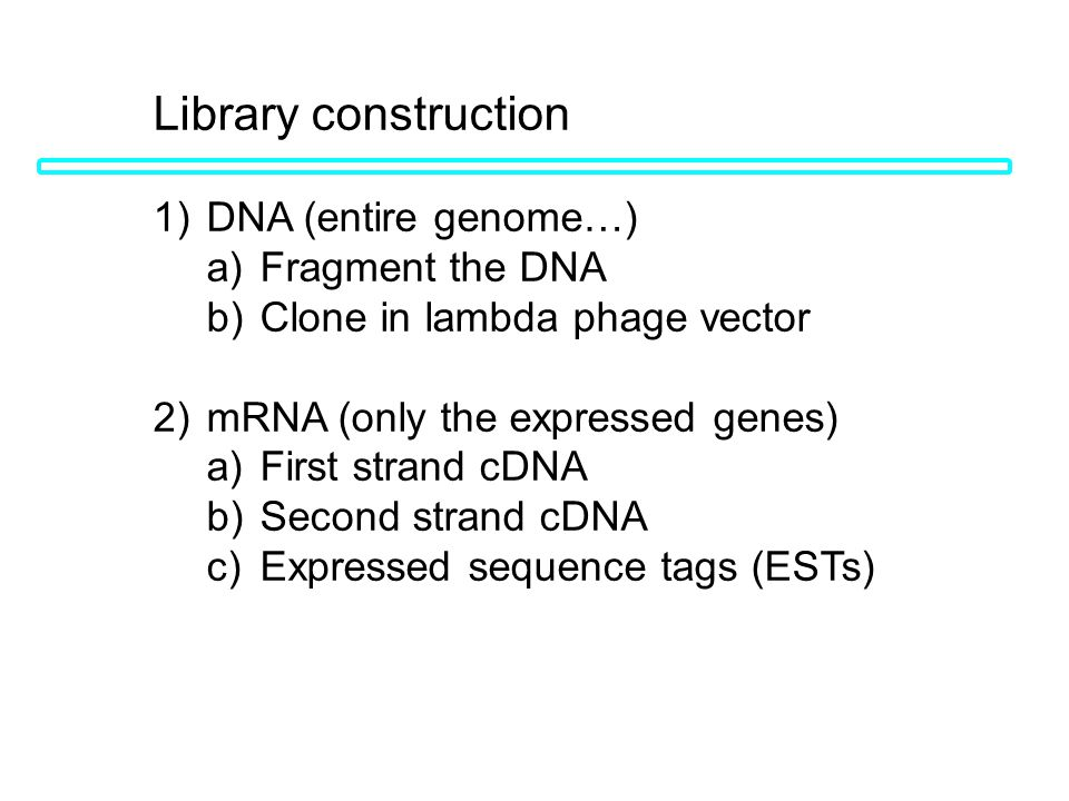 Library construction 1) DNA (entire genome…) a) Fragment the DNA b) Clone in lambda phage vector 2) mRNA (only the expressed genes) a) First strand cD