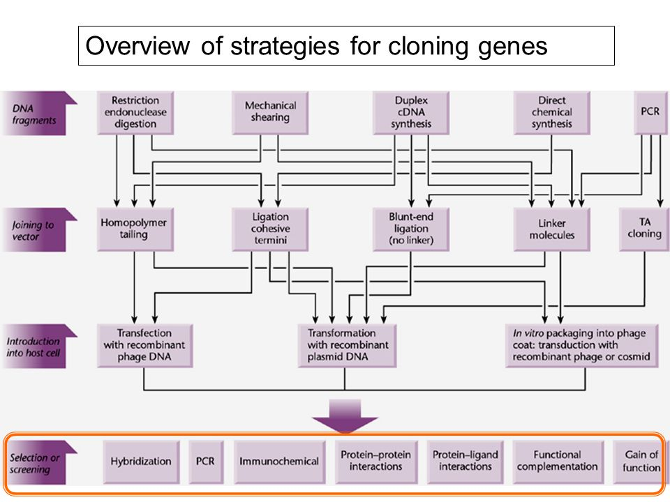 Overview of strategies for cloning genes