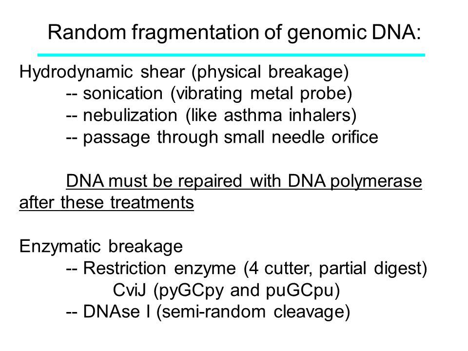 Random fragmentation of genomic DNA: Hydrodynamic shear (physical breakage) -- sonication (vibrating metal probe) -- nebulization (like asthma inhaler