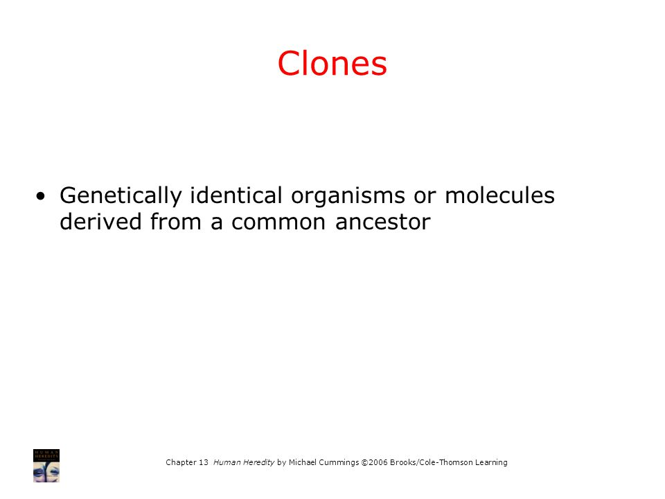 Chapter 13 Human Heredity by Michael Cummings ©2006 Brooks/Cole-Thomson Learning Clones Genetically identical organisms or molecules derived from a co