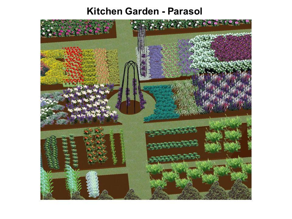 Kitchen Garden - Parasol